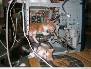 gatos-dentro-torre-ordenador-IT-department